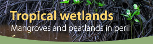 Tropical wetlands: Mangroves and peatlands in peril