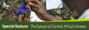 Permanent Link to The future of Central Africa's forests