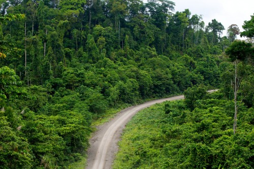 Development is creeping into Papua's forested land. Mokhammad Edliadi/CIFOR