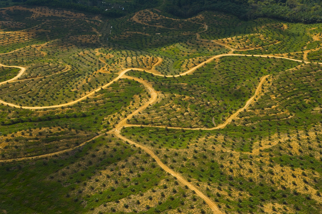 Aerial view of palm oil plantation on deforested land, Sabah, Borneo, Malaysia. WWF Deutschland