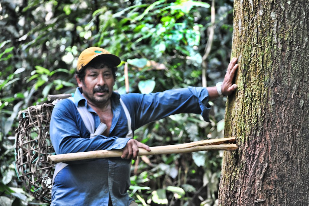 Smallholders and communities often don't reap economic benefits from forests due to convoluted and expensive regulations. Photo courtesy of Richard Vignola.