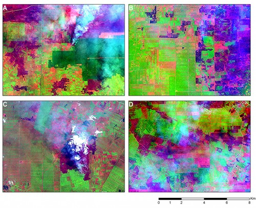 Figure 4. Four LANDSAT 8 snapshots acquired on 25 June 2013 over Riau revealing areas that have been recently burned (dark purple areas). Smoke plumes, indicating active fires, can still be seen in the snapshots to the left. The rectangular features of the burned areas, located in the middle of plantations (grid-like and rectangular patterns), suggest that these fires have been lit as part of the management of existing plantations.