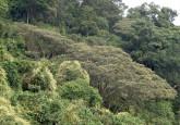REDD+ —la Reducción de Emisiones por Deforestación y Degradación de los Bosques— es un mecanismo internacional respaldado por la ONU que proporciona a los países en desarrollo incentivos financieros para mantener sus árboles en pie y, por tanto, mantener y aumentar sus reservas de carbono.