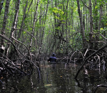 Mangrove experts urge restoration, regeneration of organic coasts