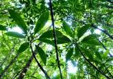 Manglar en Kalimantán occidental en Indonesia. Es necesario fortalecer el flujo de información vinculada con los proyectos de REDD+ para un mejor monitoreo y verificación de la reducción de las emisiones de carbono relacionadas con los bosques, según señala un nuevo informe.
