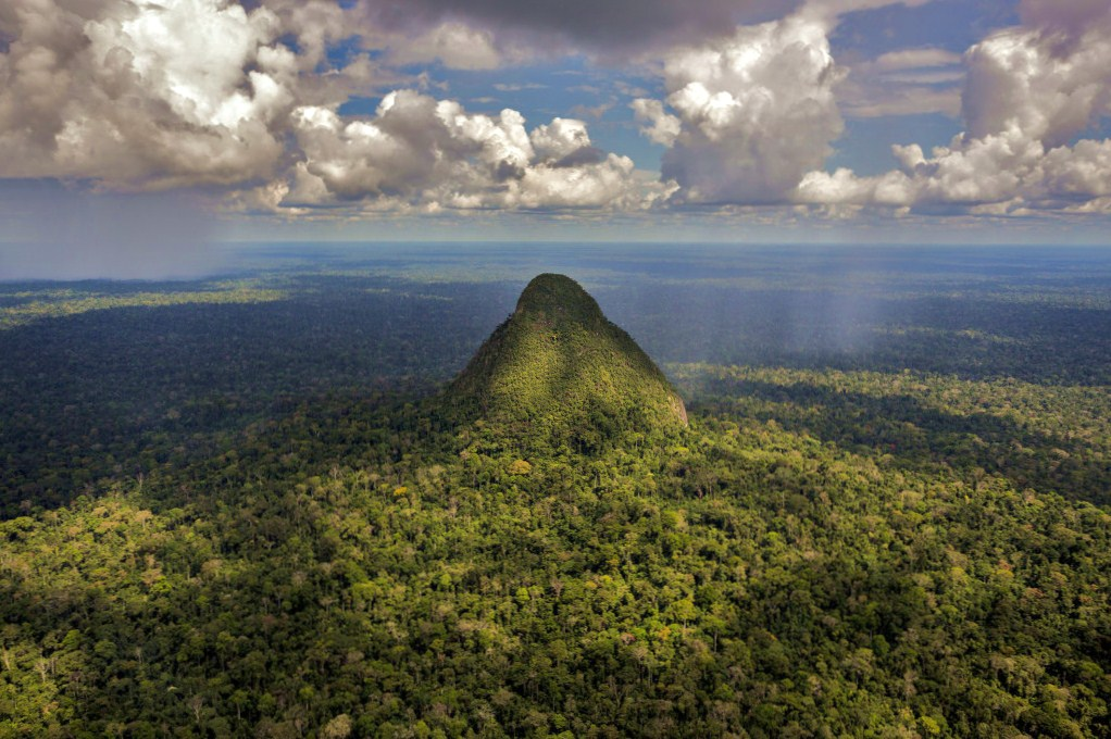 CIFOR at COP 25: A simple idea, REDD+ meets a complex reality