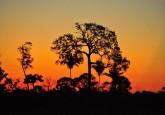Puesta de sol en Mato Grosso, Brasil. Las perspectivas de la certificación de la madera como herramienta para frenar la tala ilegal en la Amazonia brasileña se han reducido, según un estudio. Fotografía: Icaro Cooke Vieira / CIFOR.