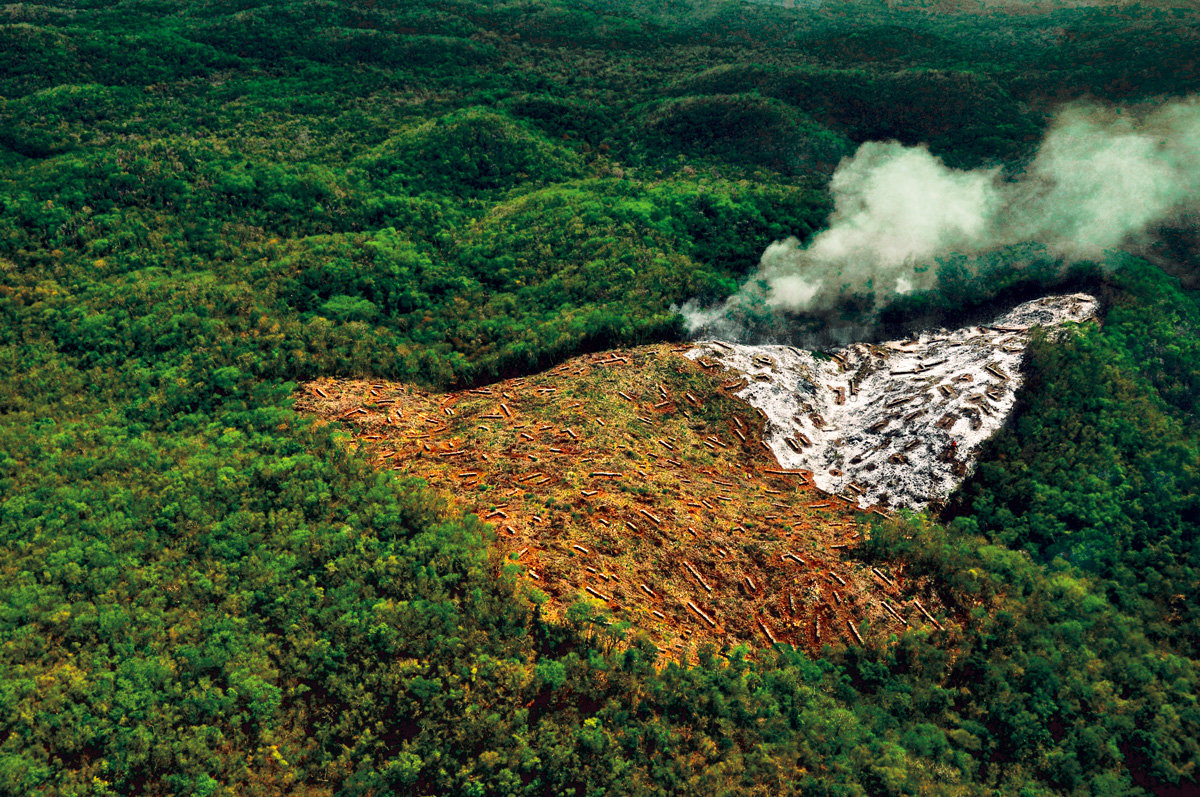 Halt tropical forest loss…our survival depends on it