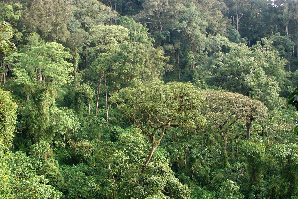 Deforestation and uganda