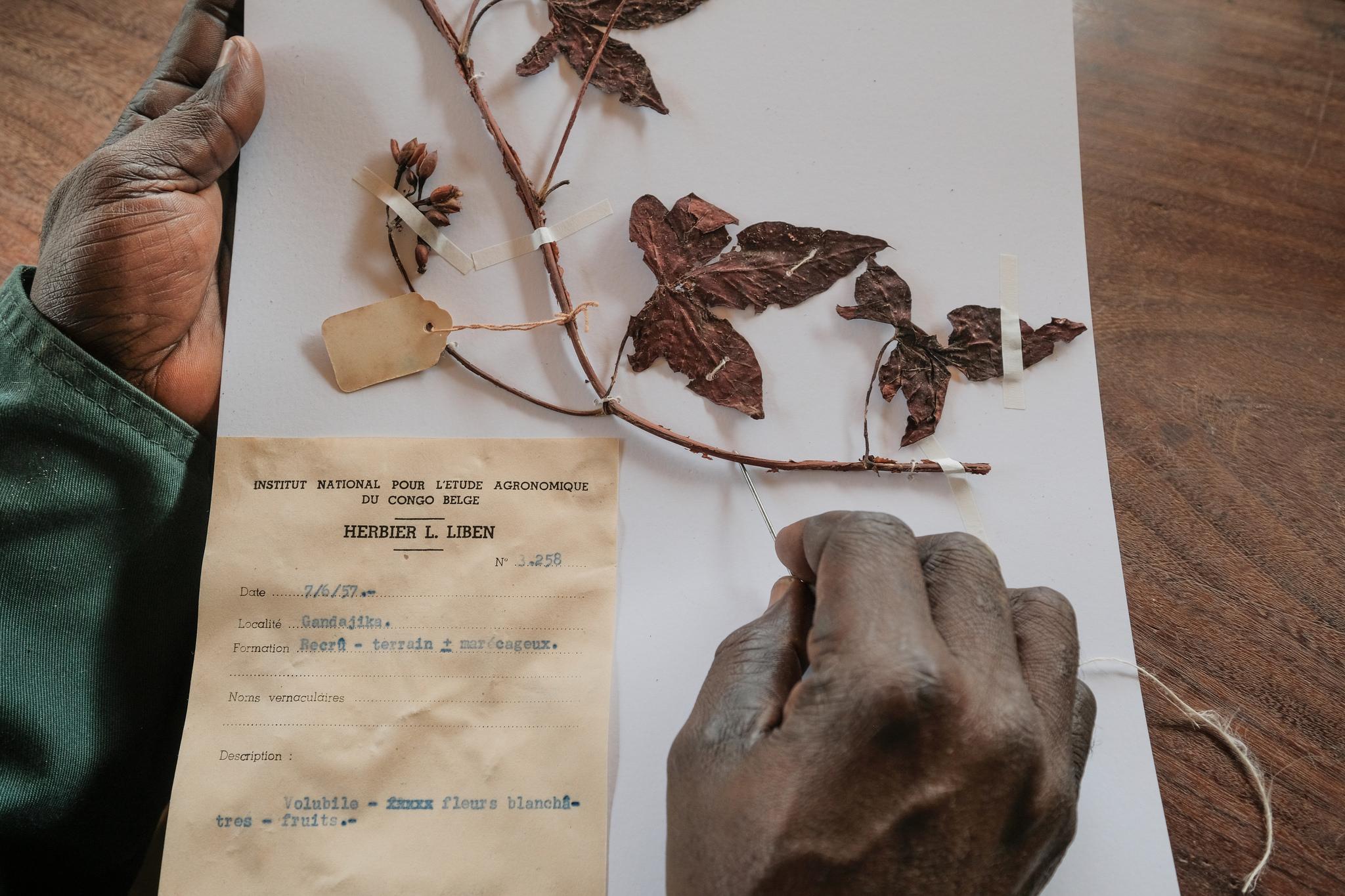 Protecting Congo's botanical treasures