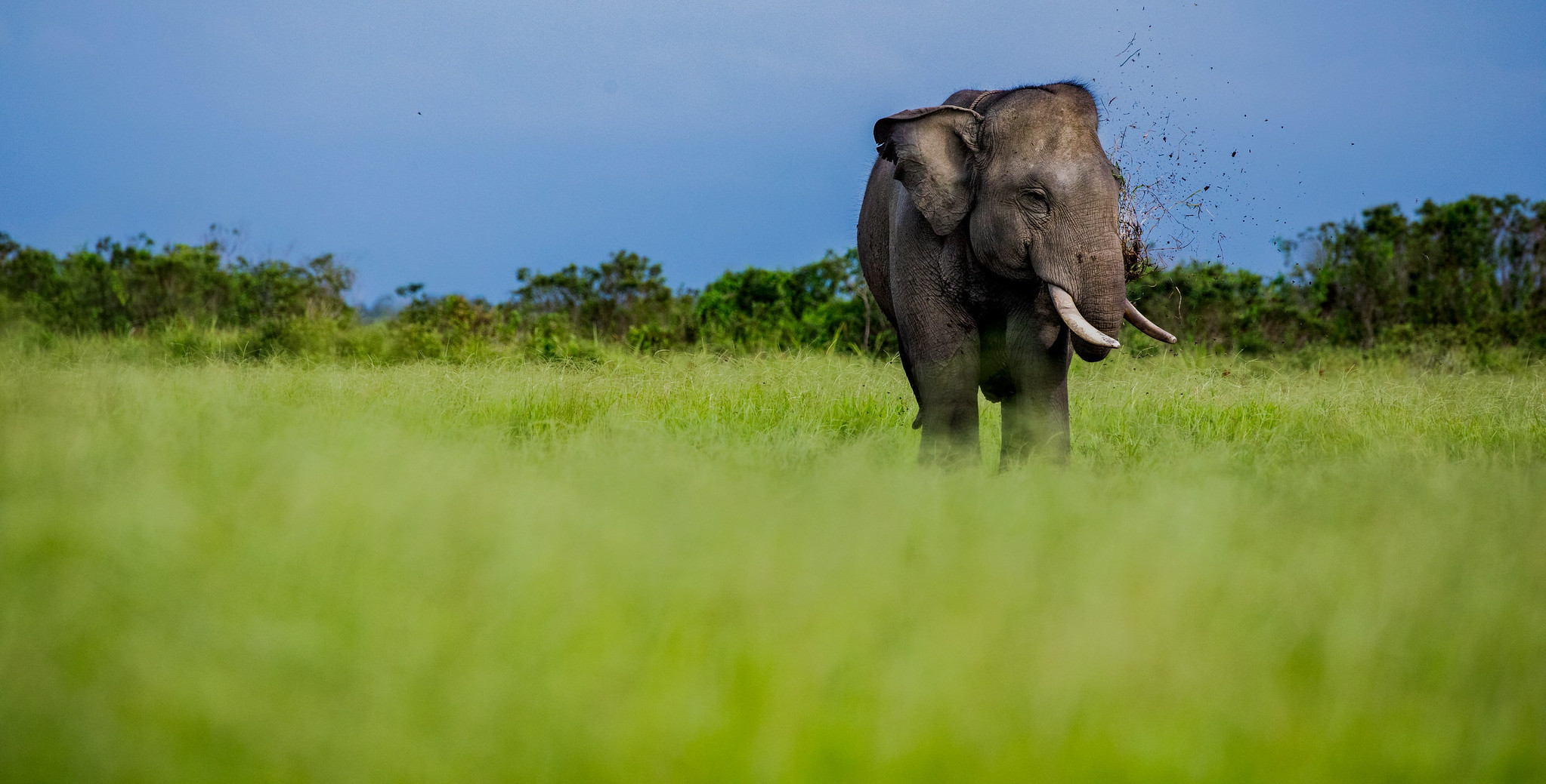 EARTH DAY: Can Sumatran elephants and people coexist?