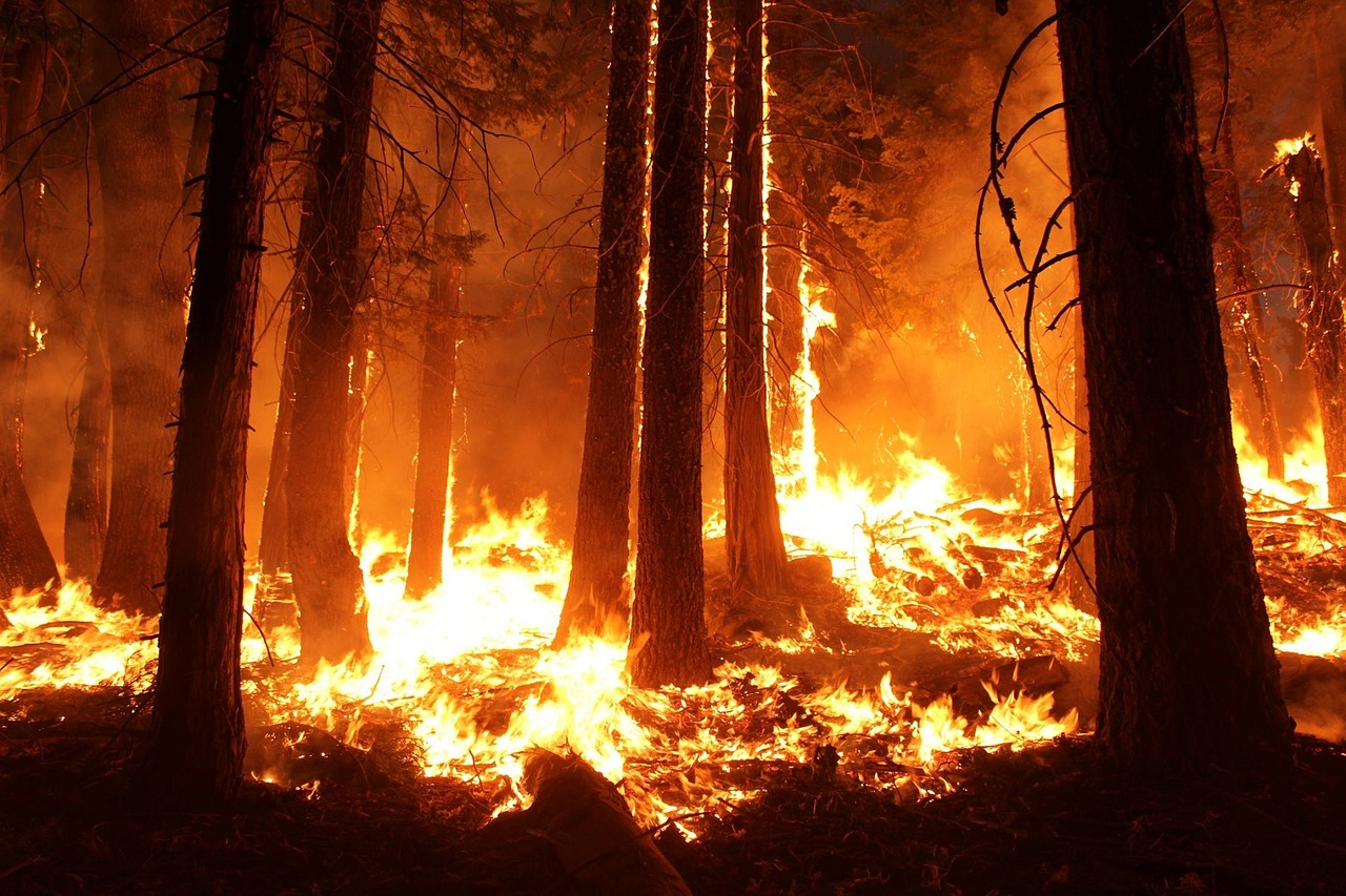 Trees and wildfire worries