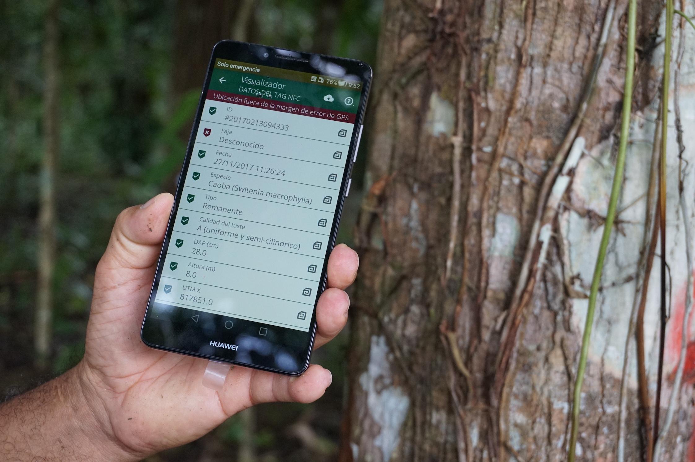 Cómo el mercado de madera puede ayudar a salvar los bosques tropicales