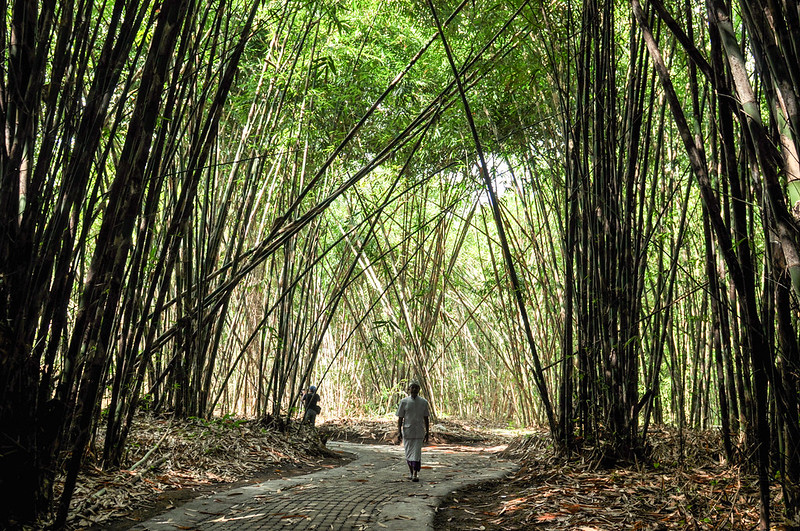 What bamboo forests do for nature and human well-being