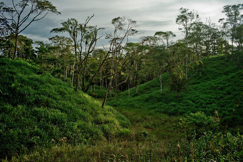 Time to get serious about evaluating REDD+ impacts