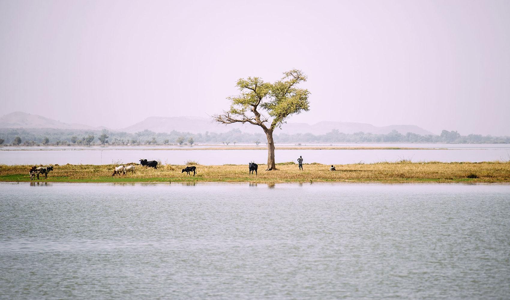 Los árboles y el agua: no subestimemos la conexión