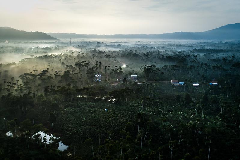 Ilmuwan CIFOR-ICRAF bersatu dengan 11.000 ilmuwan deklarasikan  'darurat iklim'