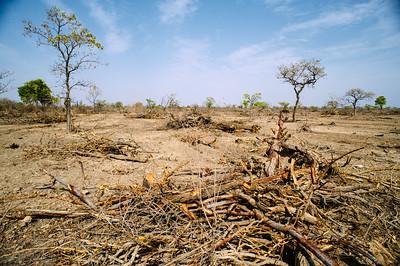 Científicos de CIFOR e ICRAF se unen a la declaración de la 'emergencia climática'