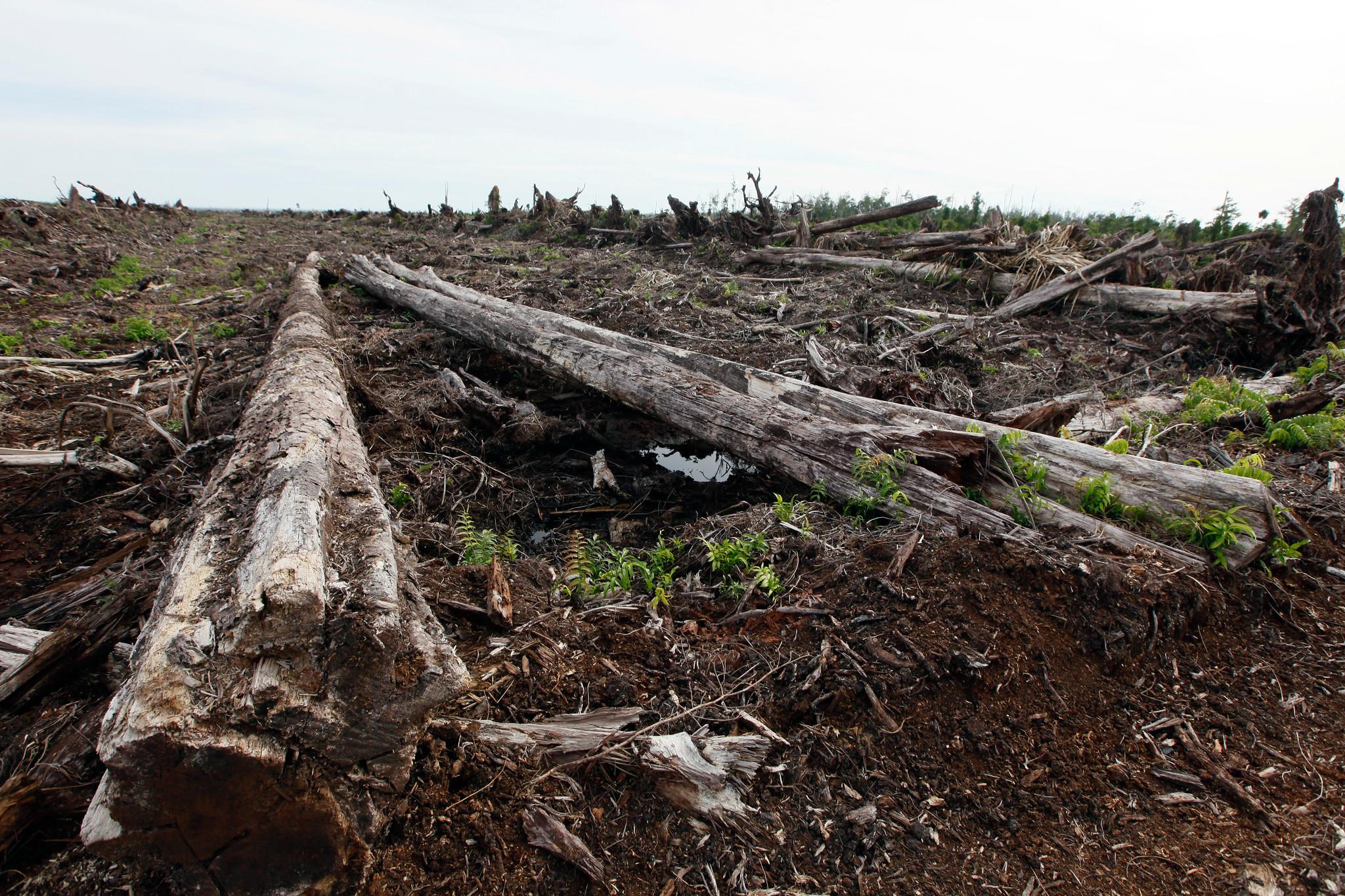 COP25: Una idea sencilla, REDD+, se enfrenta a una realidad compleja