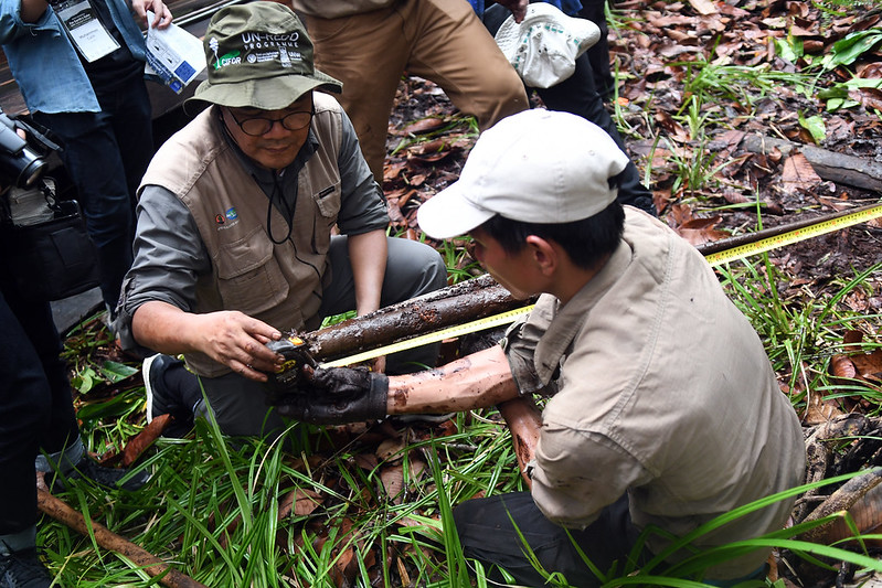 Innovative peatland restoration efforts key to mitigating climate change