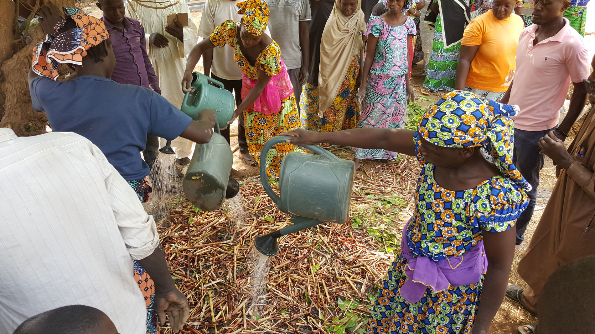 Les petits exploitants agricoles camerounais s'impliquent dans la restauration des paysages forestiers