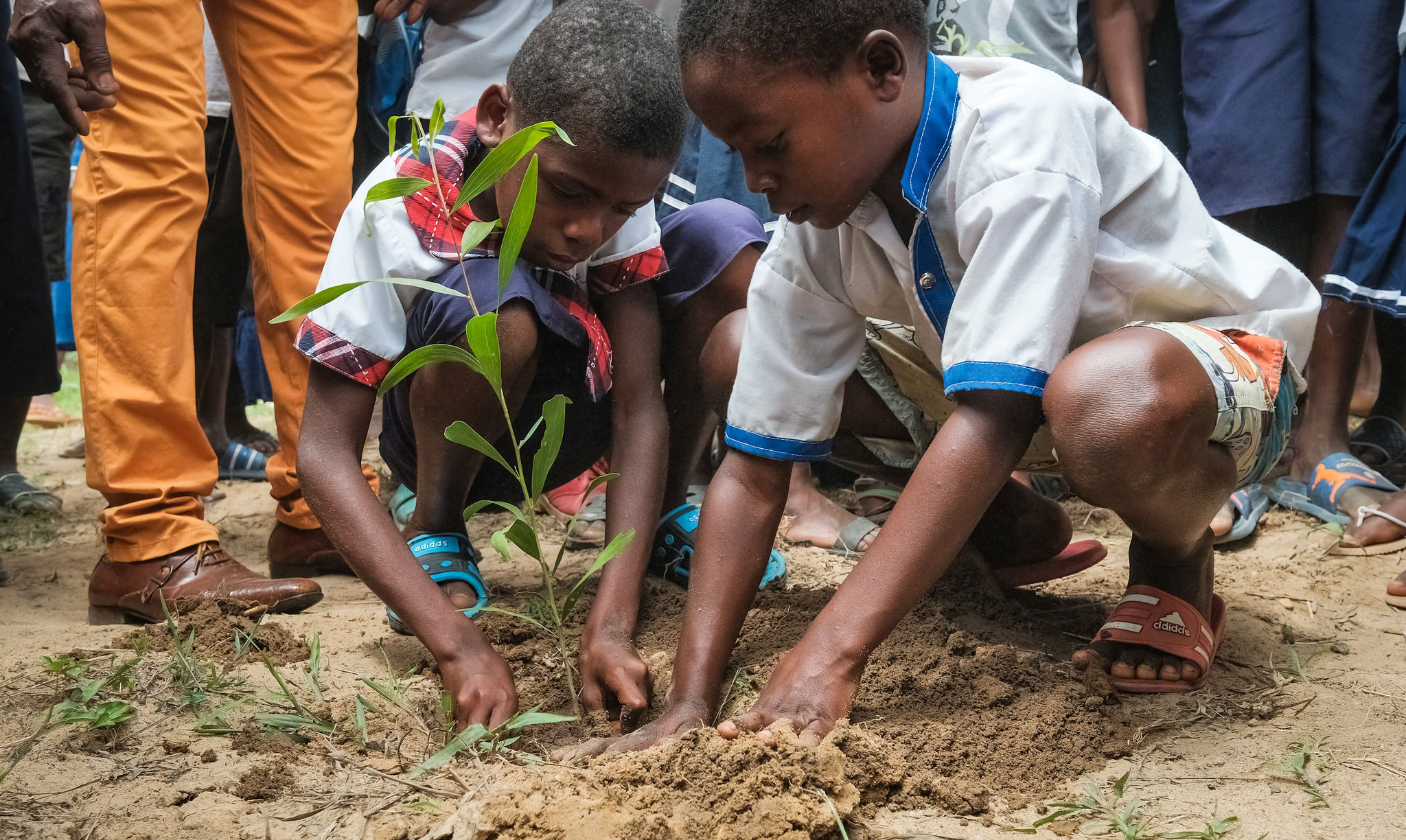 Why education is essential to the future of forests