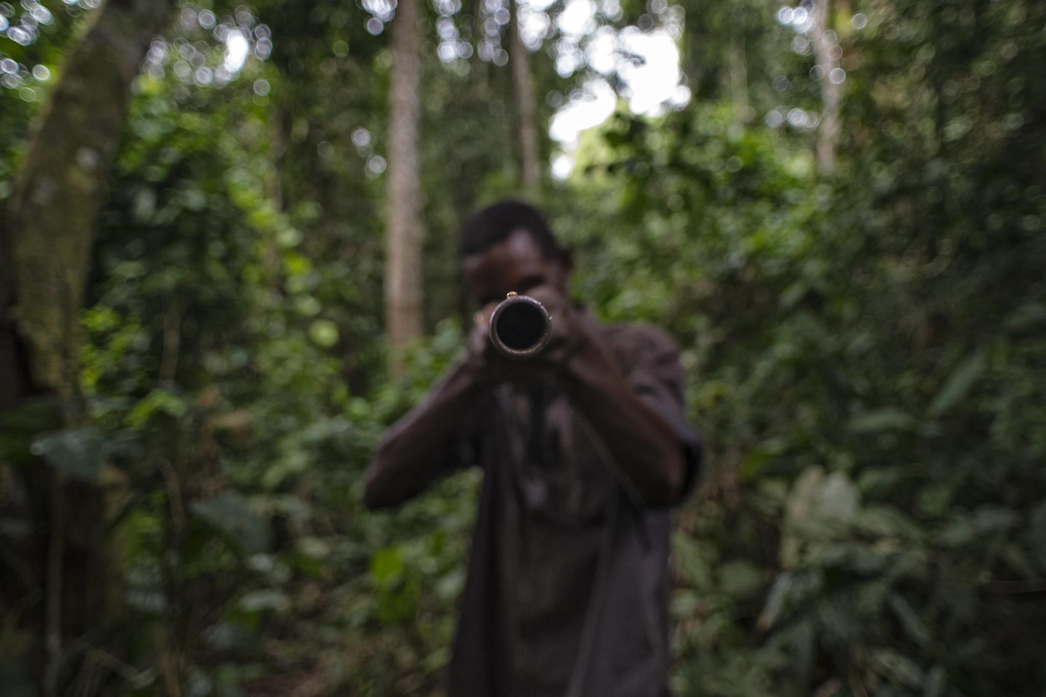 La pandémie du COVID-19 : Retour de la nature dans les « forêts vides » après la disparition des animaux