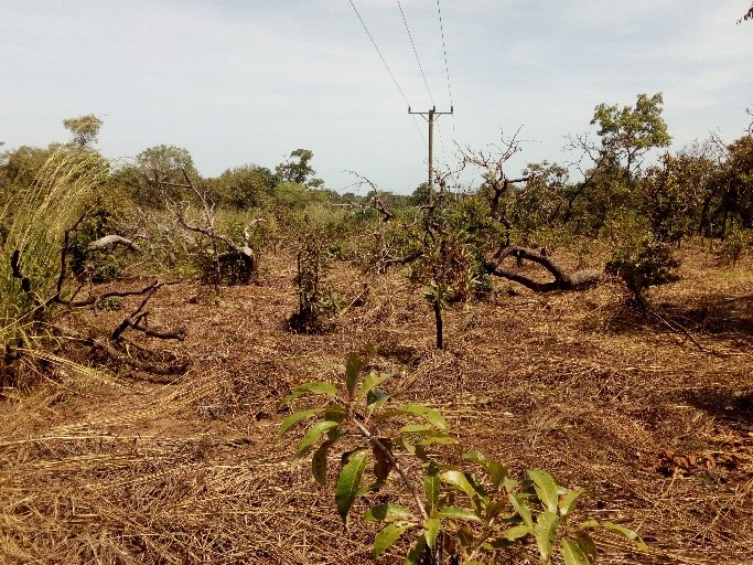 Challenges and potential for landscape approaches  in Northern Ghana