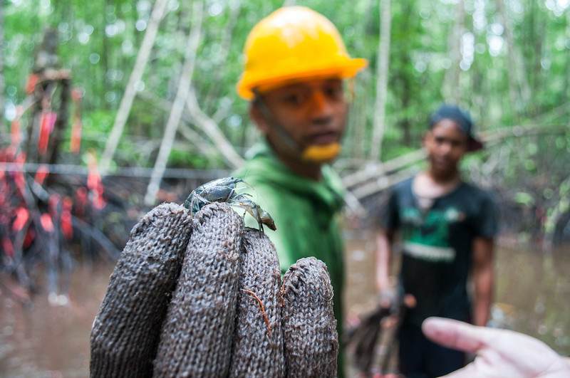 The carbon on your plate: mangrove and aquaculture