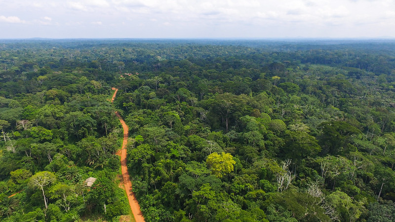Tracking REDD+: A story of remuneration and rewards for avoided deforestation in Central Africa