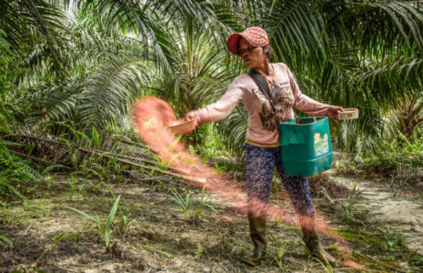 Indonesia Archives - CIFOR Forests News