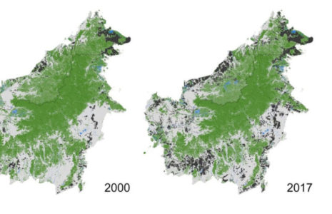 Borneo Archives - CIFOR Forests News on