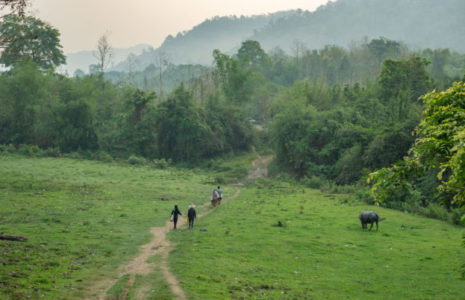 Laos PDR Archives - CIFOR Forests News
