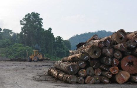Illegal logging - CIFOR Forests News